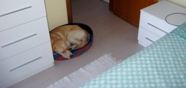 New wall, new floor, new bed, new furniture, same dog.