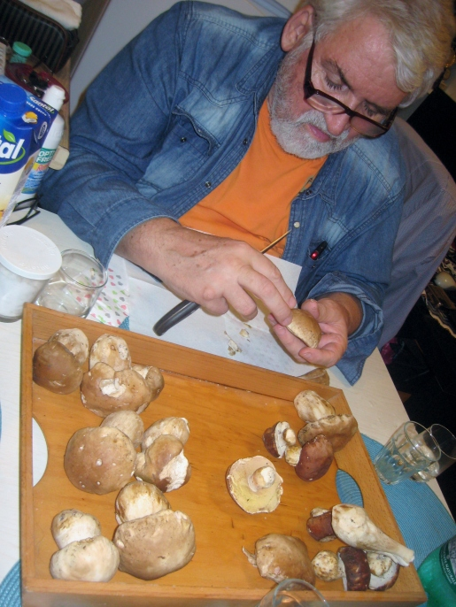 Slovenian porcini mushrooms being expertly handled