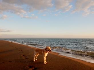 February - beach posing