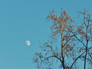 Roma: The moon is a circle even when there is nobody in the forest to see it.