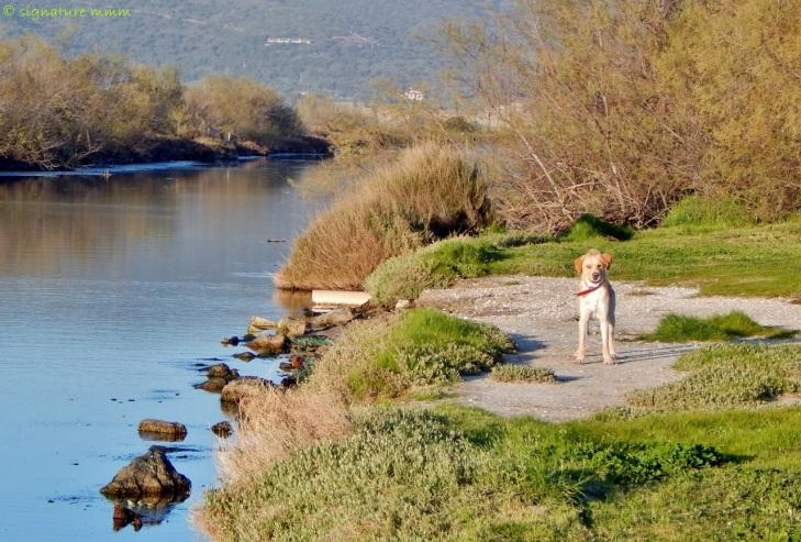 Dog park in Orbetello. April.