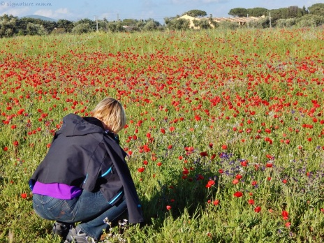 The same field where I lied down and got zero poppies. /Capalbio scalo/